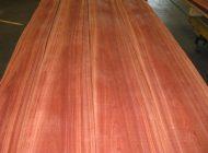 bloodwood veneer
