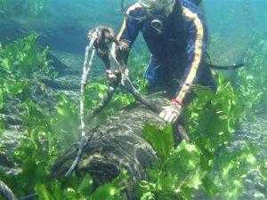 Sinker Cypress Veneer, River Recovered Cypress, Veneer